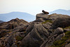 One slab of granite perches above the huge curved boulders of granite rock in Rocky Mountain National Park.