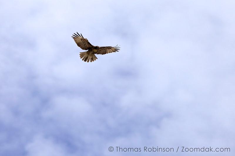 Flight of the Predator