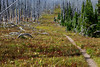 The trail separating death and life. A forest fire destroyed many of the trees on Flattop Mountain in Glacier National Park, Montana.
