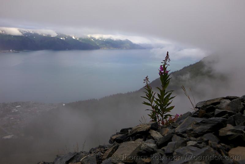 Fireweed Upon the Mountain, Alaska