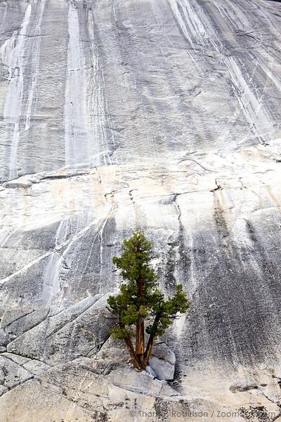 Tree and Granite 2