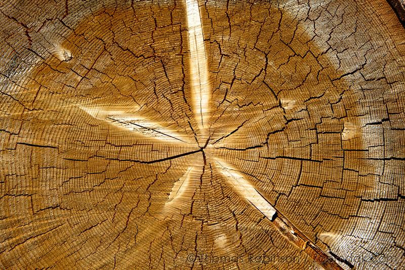 Wood Round Texture
