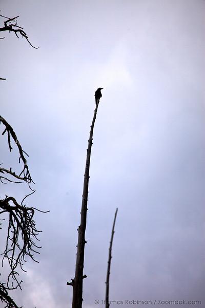 Raven Perch