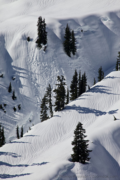Shadows of pine trees stretch across folds of snow along the Mt. Baker basin.