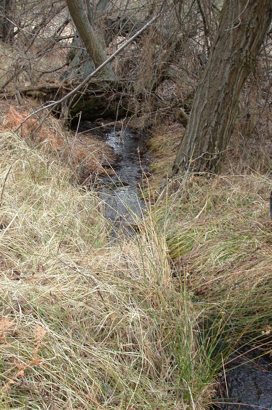 A small stream provides water for two ponds.