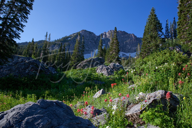 Albion Basin, Wildflowers