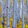 Aspen Fall Panoramic