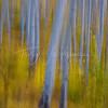 Aspen Blur