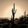 Saguaro Sunset, Arizona