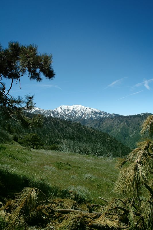 "<A HREF=""http://dmenkes.smugmug.com/gallery/620061/1/26266264"">Mt. Baldy</A> from a meadow."
