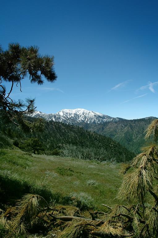 "<A HREF=""http://dmenkes.smugmug.com/gallery/620061/1/26266264"">Mt. Baldy</A> from a meadow."