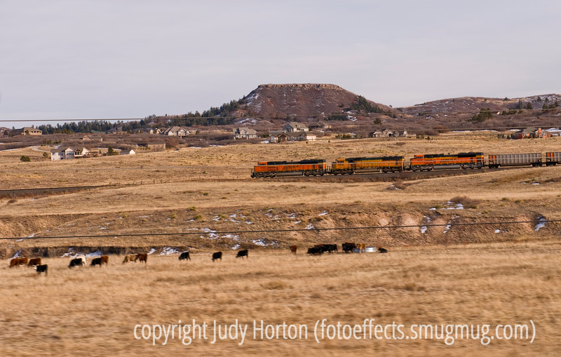 Train between Denver and Colorado Springs passing a field of cattle