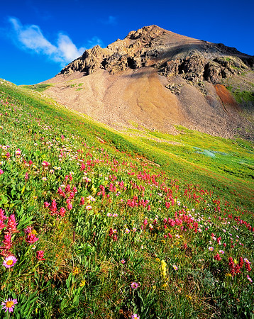 Yankee Boy Basin, Colorado.  Magenta Paintbrush, Yellow Paintbrush, and Asters are the dominant flowers on this hillside.  It's a pretty long walk to get here if you don't have a high clearance 4WD.  I rented a Jeep!
