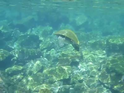 Sea turtles, Galapagos