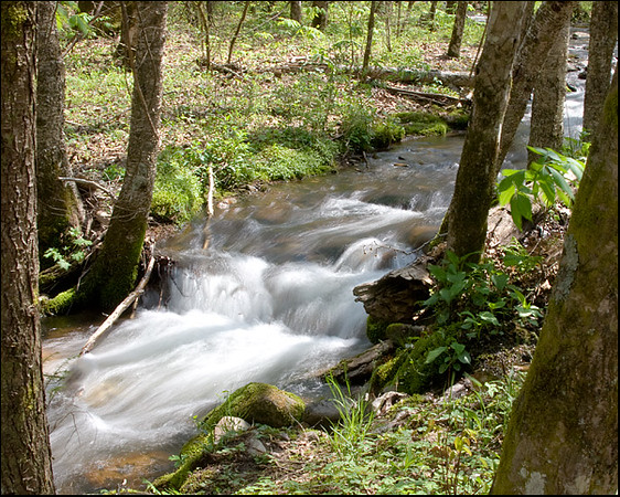 Cataloochee Valley stream