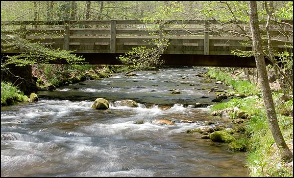 Cataloochee Valley stream