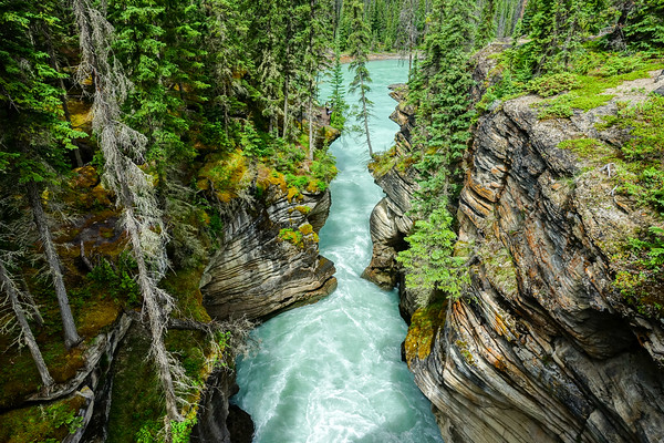 Visiting the Athabasca Falls, we found the canyon along the trail more visually appealing.
