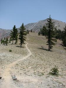 Mt. Eddy trail