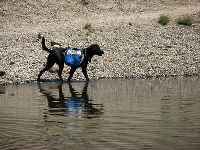 pack dog shea at deadfall lake