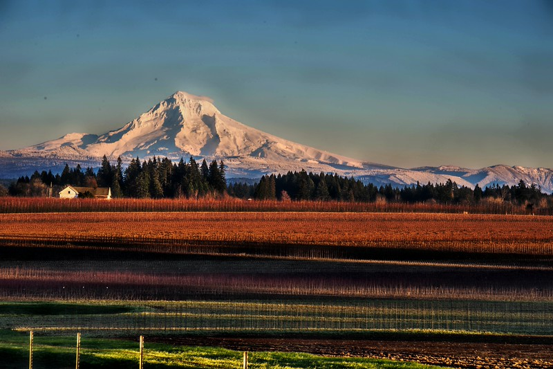 Mt. Hood:  Tree Nursery  Being Readied For Planting