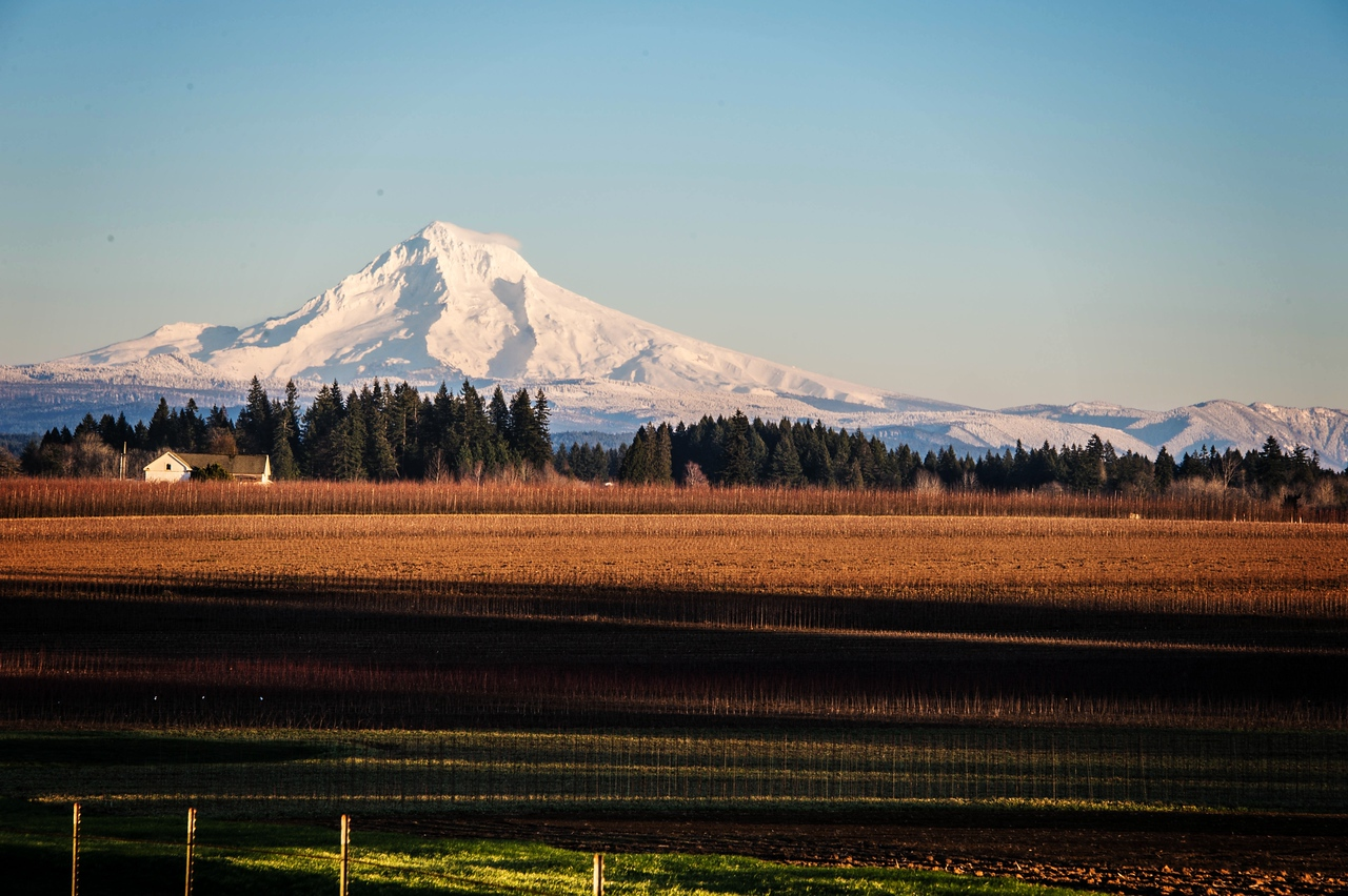 Mt. Hood & Tree Nursery being readied for planting in Spring. - 1/2/2016