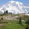Mt. Rainier & wildflowers from Alta Vista Trail, 7-30-2013