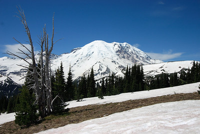 Mt. Rainier viewed from the meadows above Sunrise