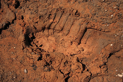 Footsteps in the colorful mud. Neil Armstrong on the trail?