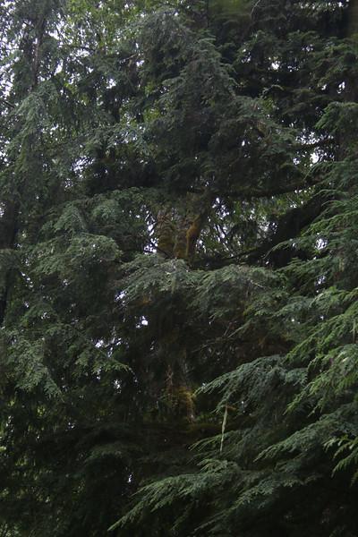 Mt Rainier_Hike_Girls