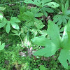 Unknown leaf
