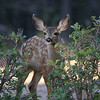 Young Deer<br /> Howard,Colorado