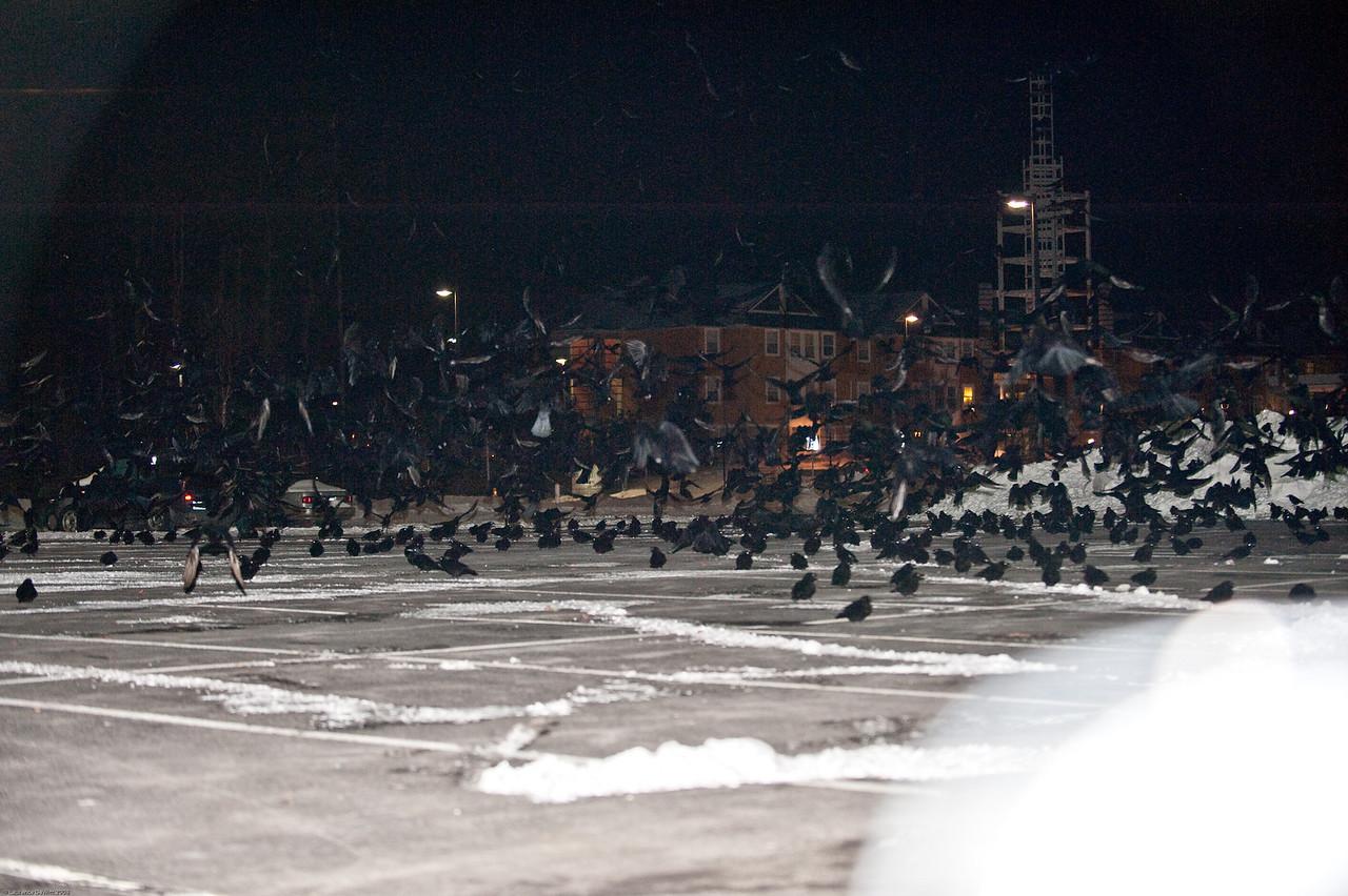 murders of crows 1-4-09-33