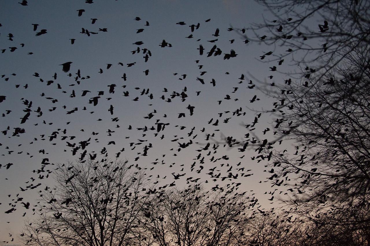 murders of crows 1-4-09-20