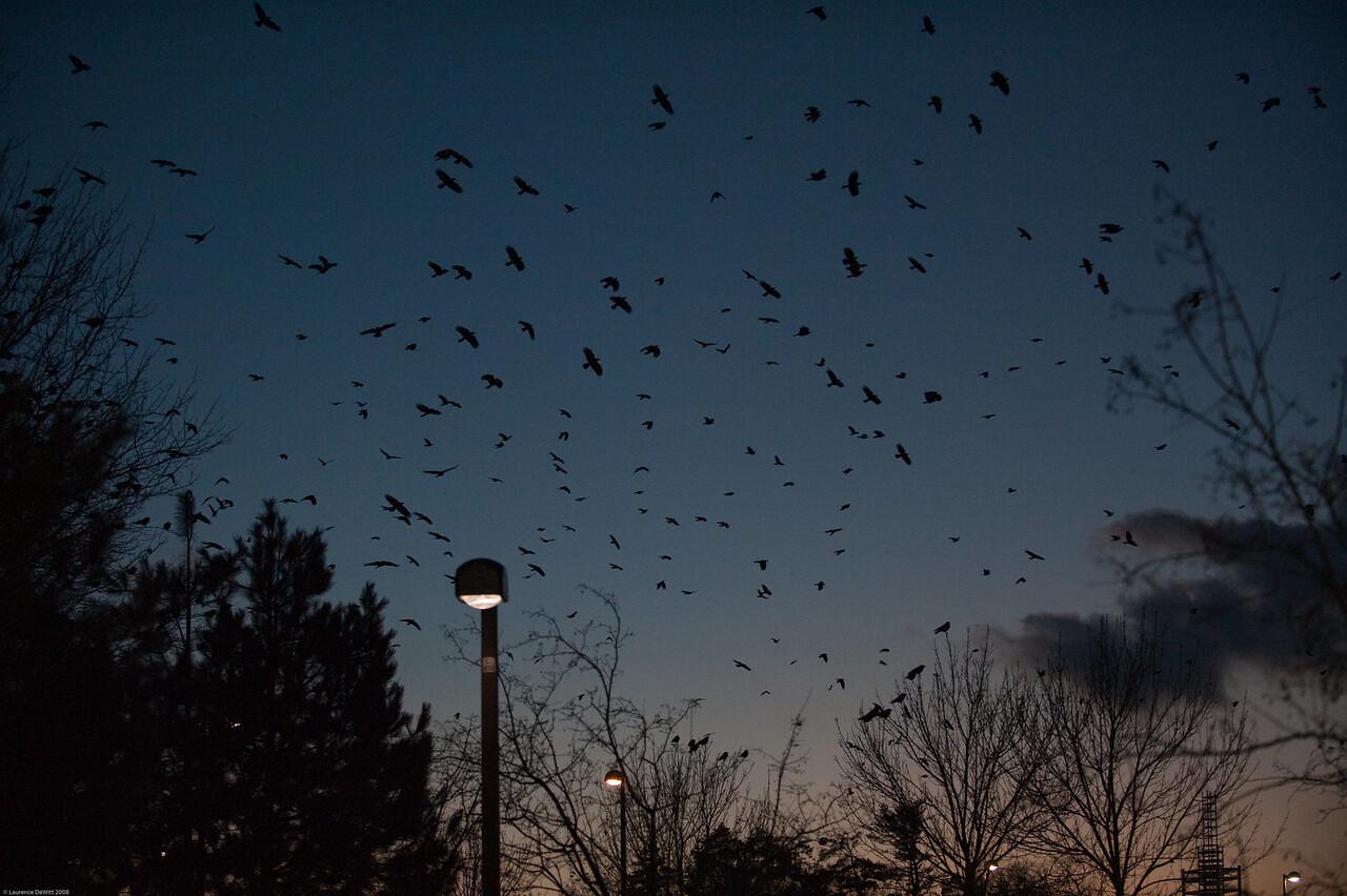 murders of crows 1-4-09-25