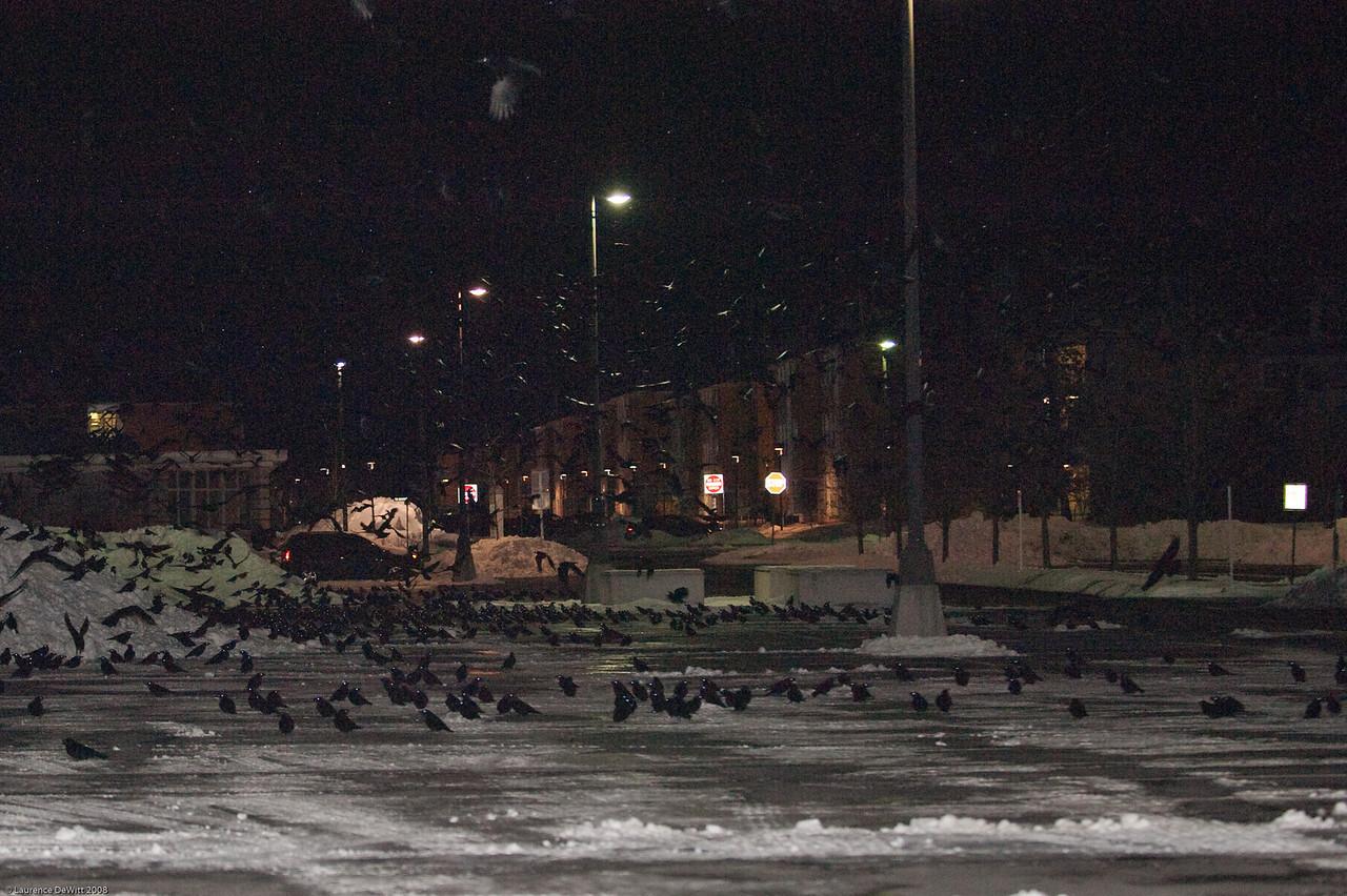 murders of crows 1-4-09-31