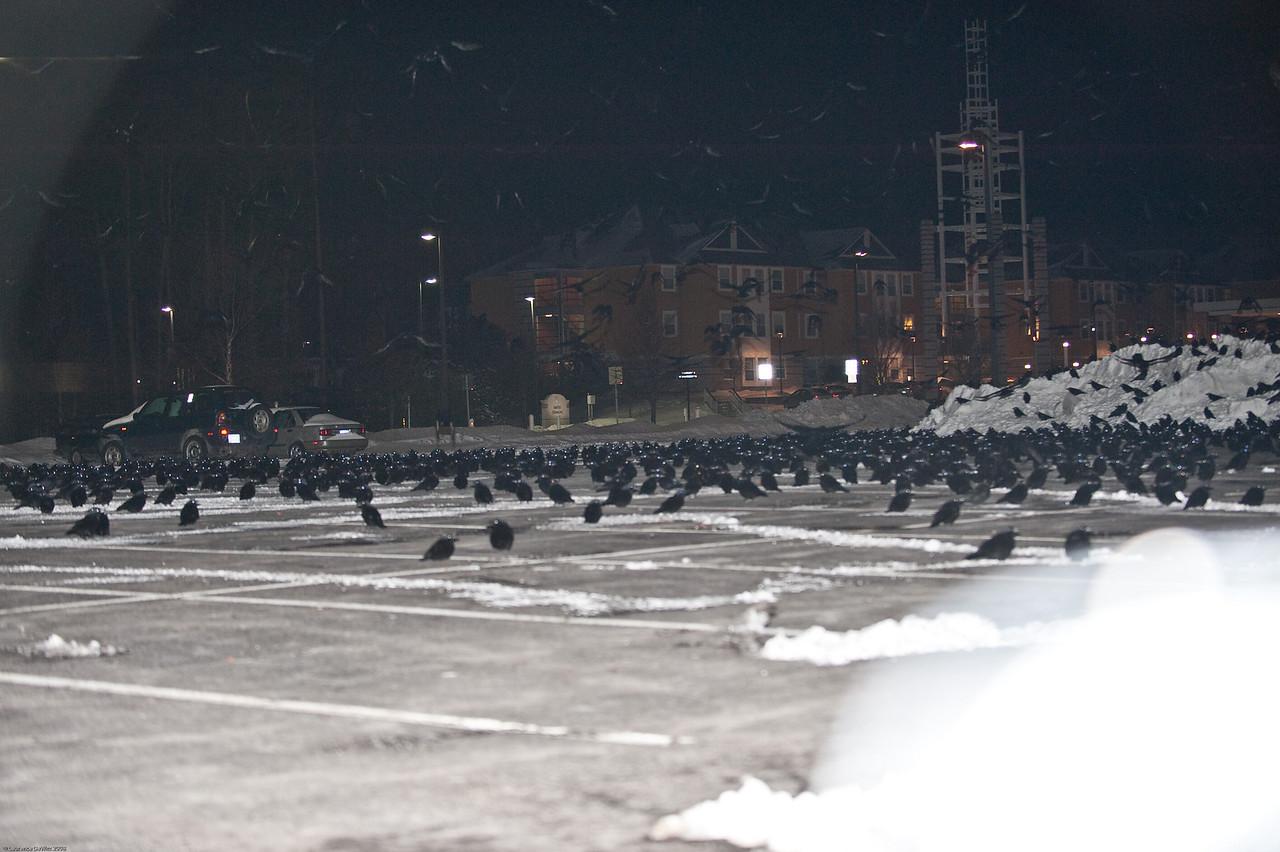 murders of crows 1-4-09-32