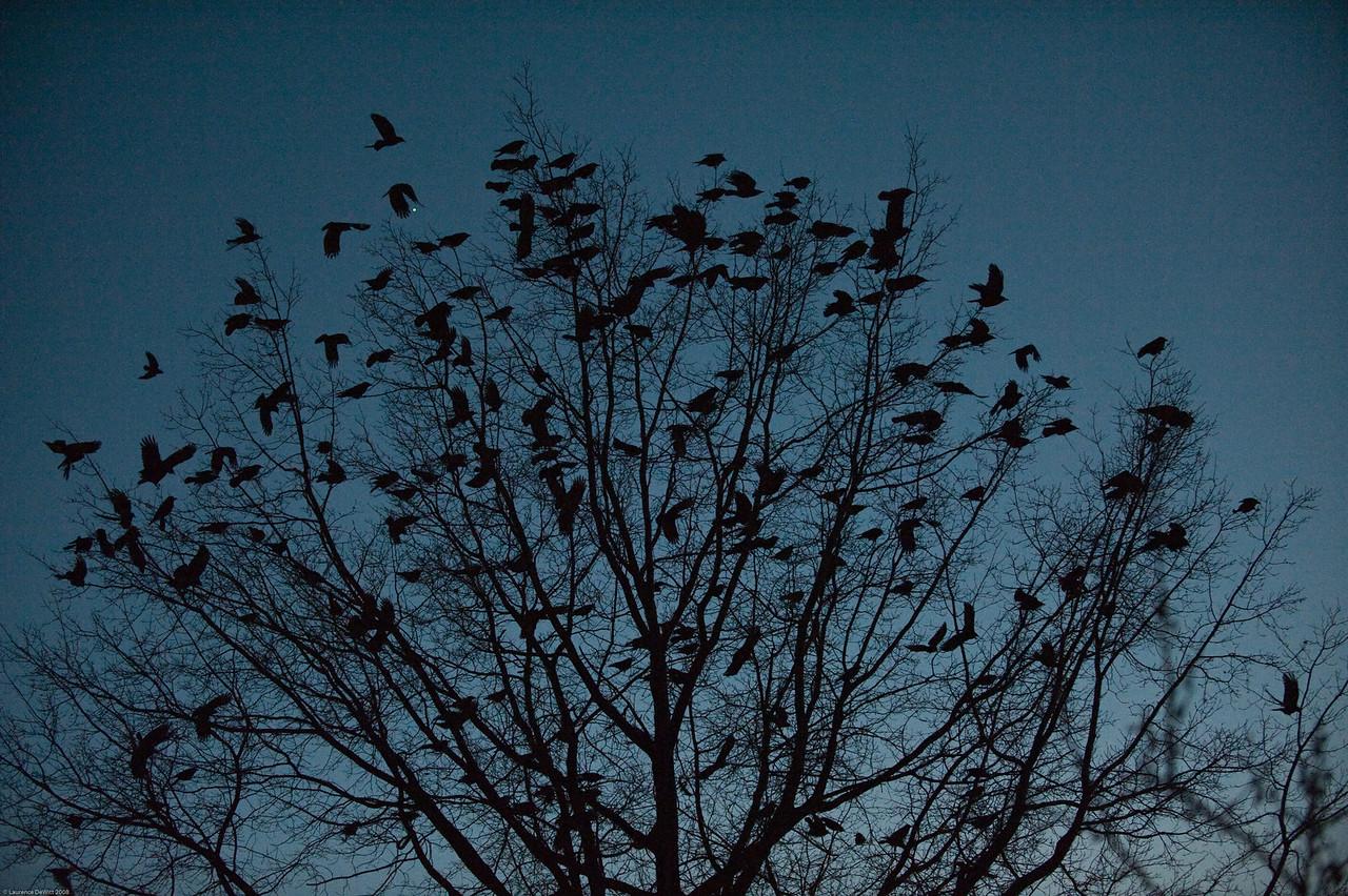 murders of crows 1-4-09-21