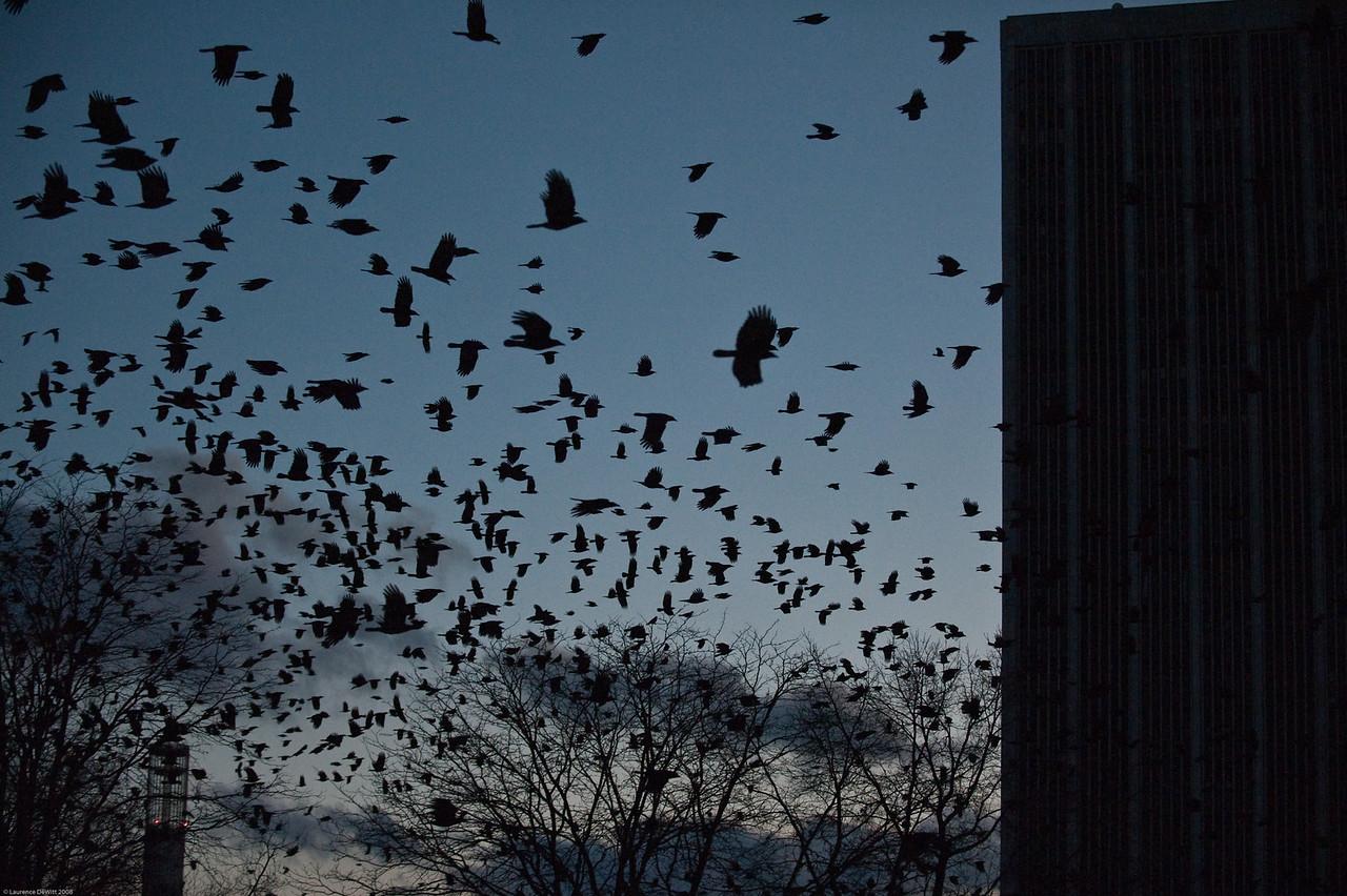 murders of crows 1-4-09-18