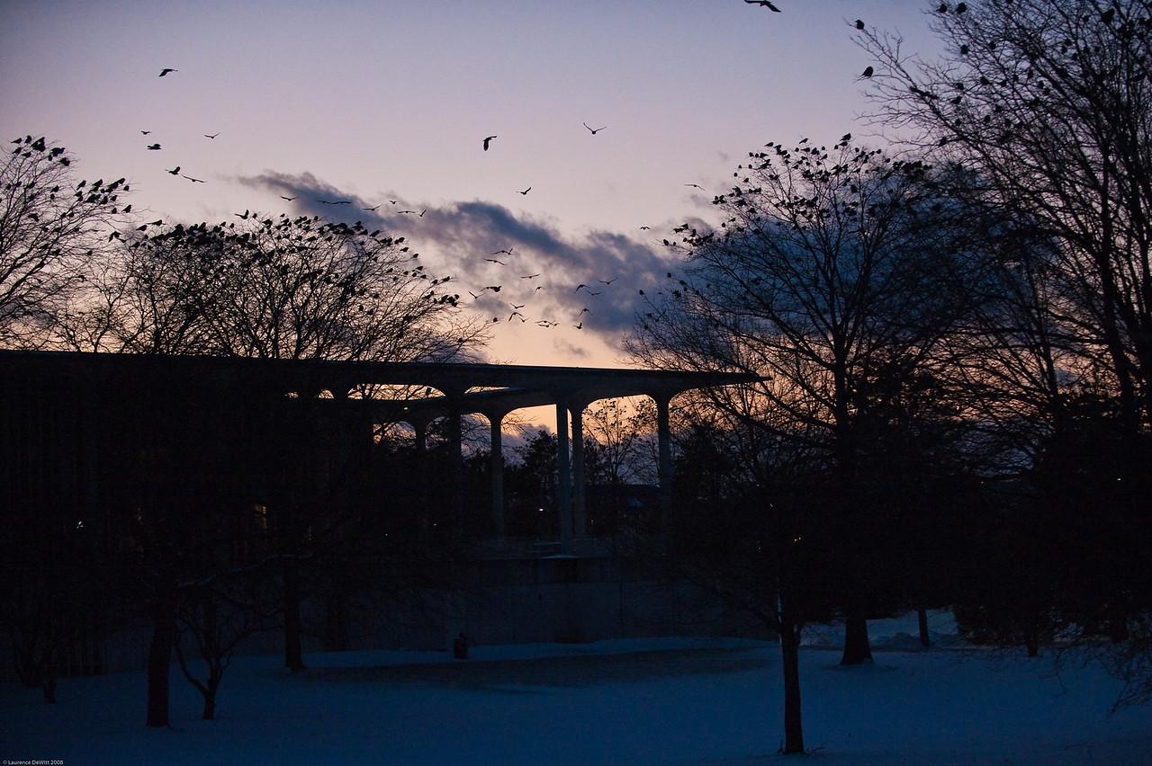 murders of crows 1-4-09-16