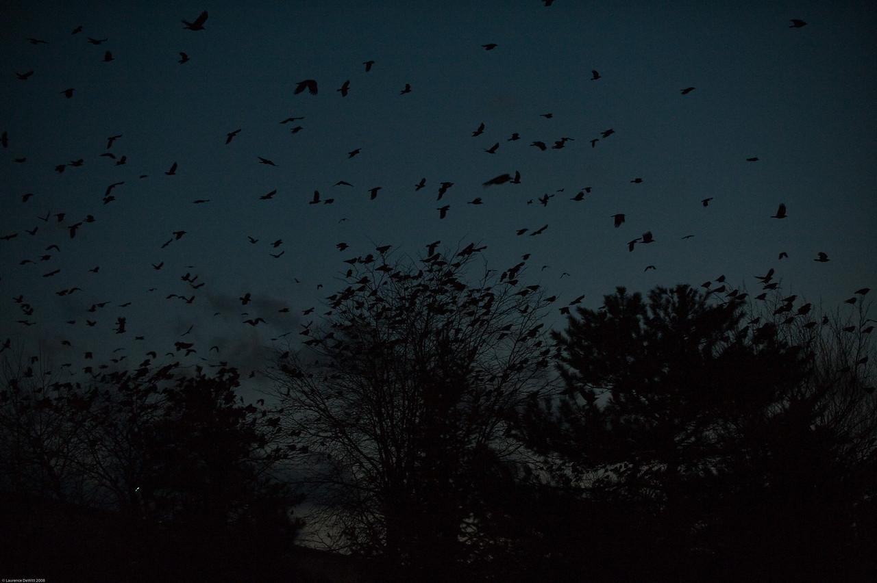 murders of crows 1-4-09-23