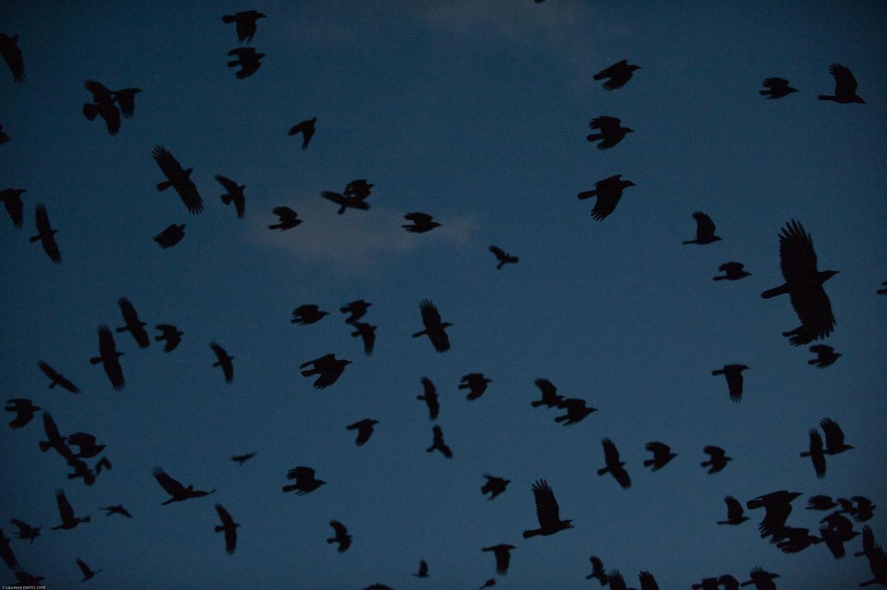 murders of crows 1-4-09-19