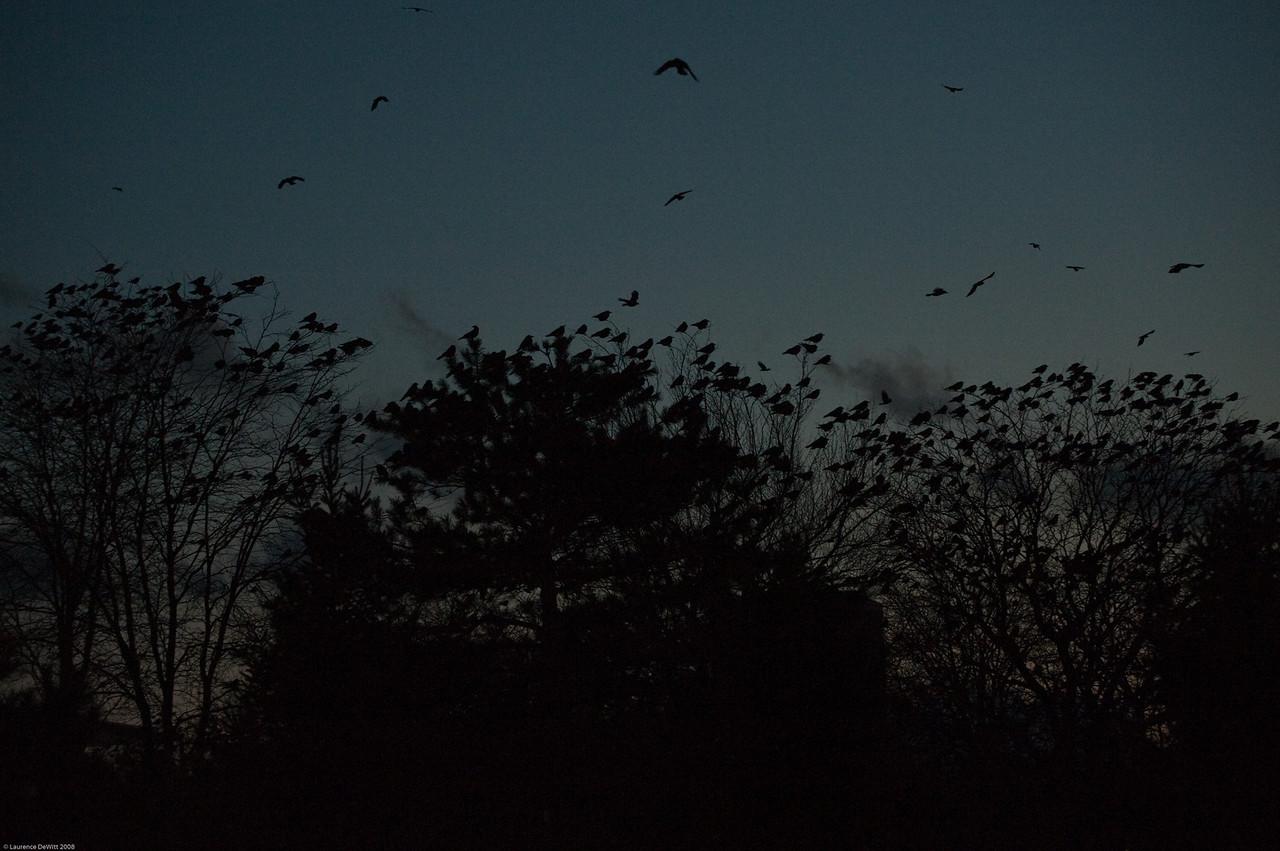 murders of crows 1-4-09-22