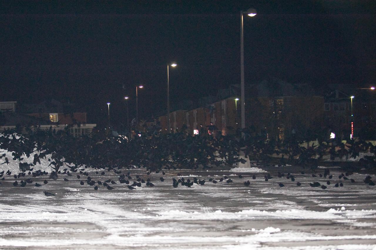 murders of crows 1-4-09-29