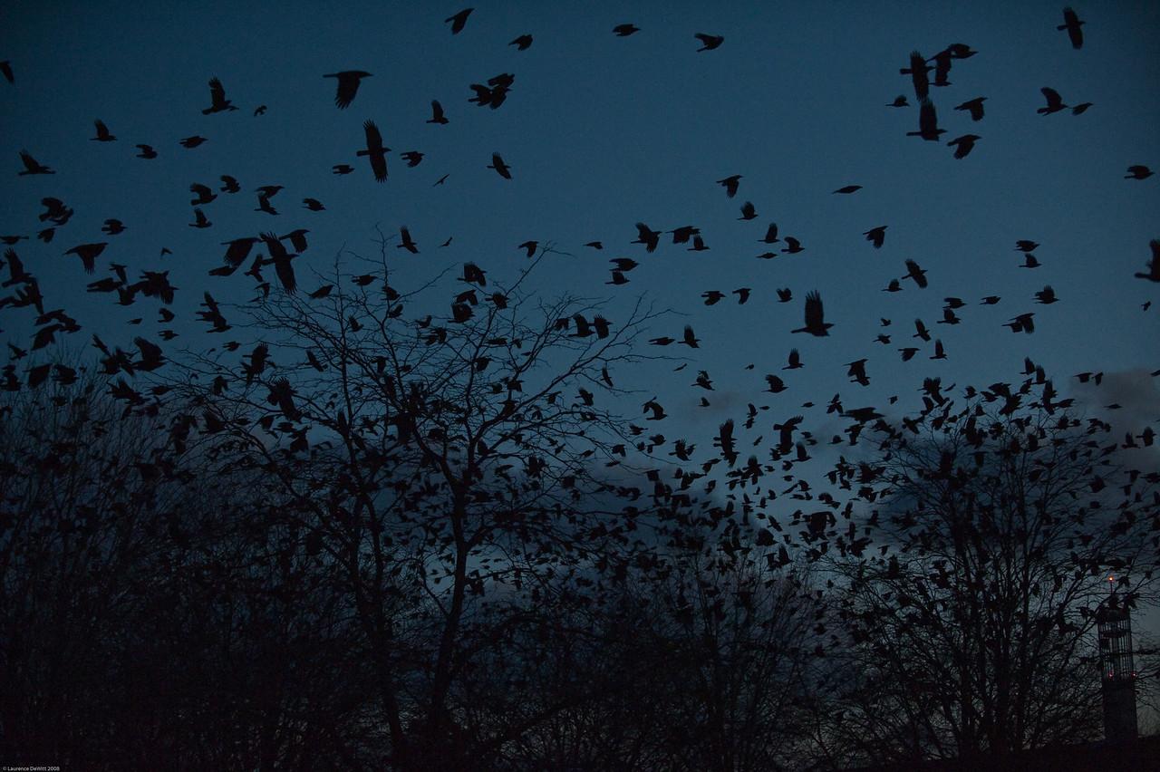 murders of crows 1-4-09-17