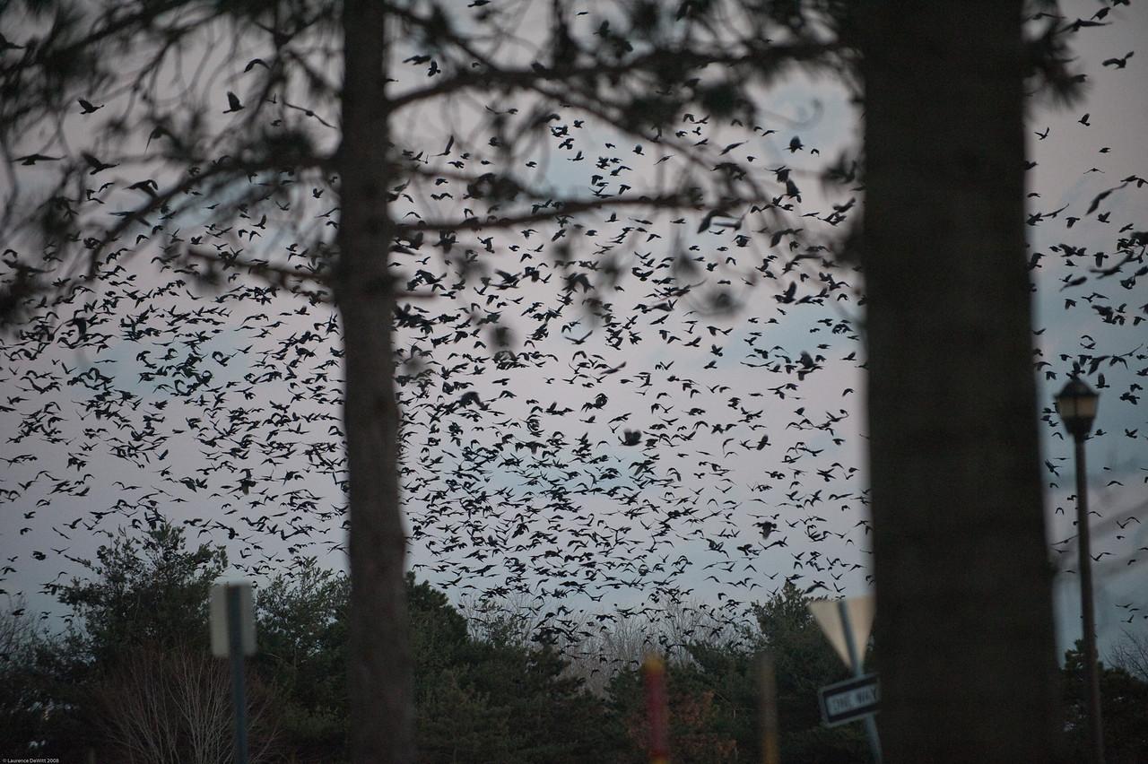 murders of crows 1-4-09-10