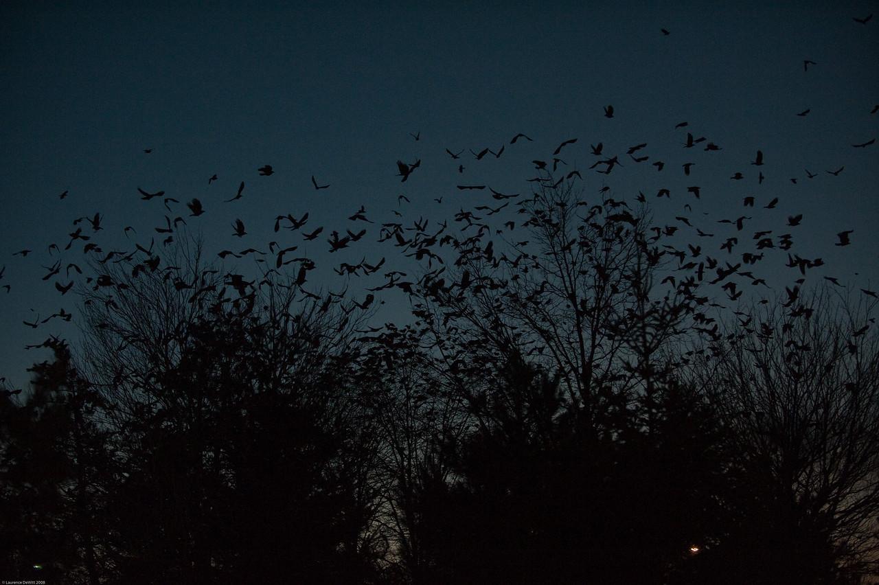 murders of crows 1-4-09-24