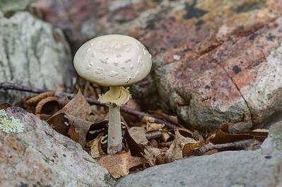 Mushroom in Leaves and Rocks