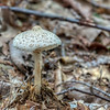 Mushroom in Leaves
