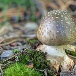Mushroom With Broken Stem