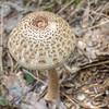 Mushroom Camoflauge